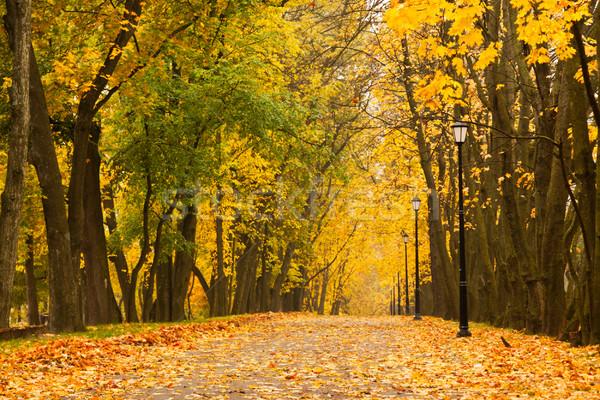 Autumn park Stock photo © dmitry_rukhlenko