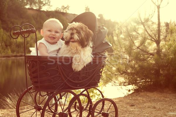 Cucciolo seduta vintage carrozzina sorriso Foto d'archivio © DNF-Style