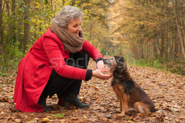 Retired woman in the forest with her pet Stock photo © DNF-Style