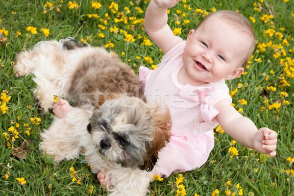 Stockfoto: Gelukkig · baby · puppy · zoete · veld