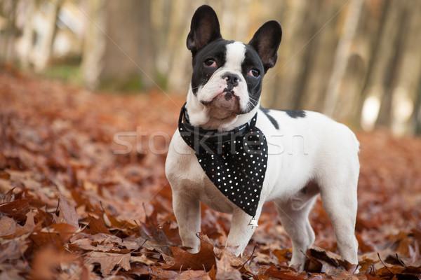 Floresta feliz cão fora caminhada animal Foto stock © DNF-Style