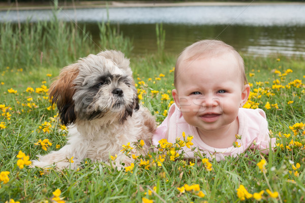 Baby and puppy in the field with buttercups Stock photo © DNF-Style