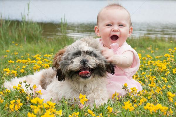 Stok fotoğraf: Tatlı · köpek · yavrusu · alan · bahar · bebek