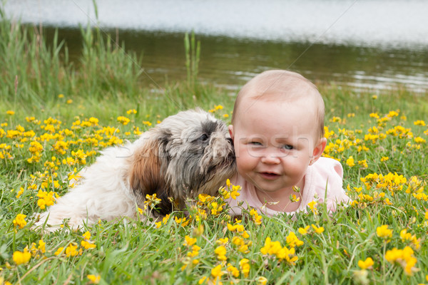 Puppy is washing the baby Stock photo © DNF-Style