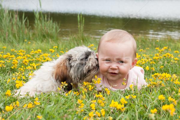 Stock fotó: Kutyakölyök · mosás · baba · édes · kislány · mező