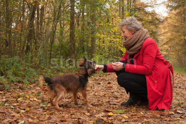 Retired woman and her dog Stock photo © DNF-Style