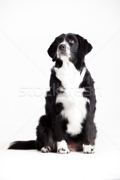 Sweet dog is waiting Stock photo © DNF-Style