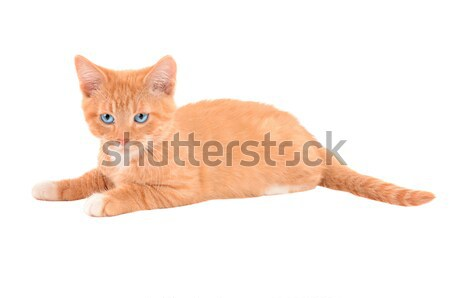öfkeli turuncu kedi yavrusu beyaz bebek Stok fotoğraf © dnsphotography