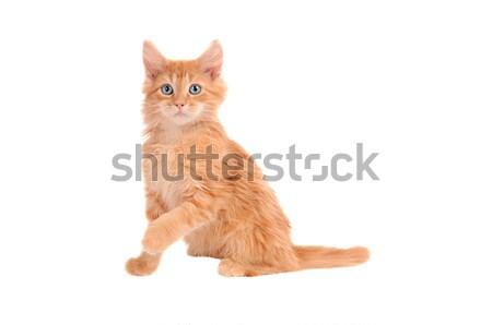 Turuncu kedi yavrusu zencefil geniş gözler Stok fotoğraf © dnsphotography