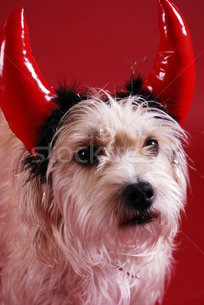 Köpek şeytan halloween kostüm Stok fotoğraf © dnsphotography
