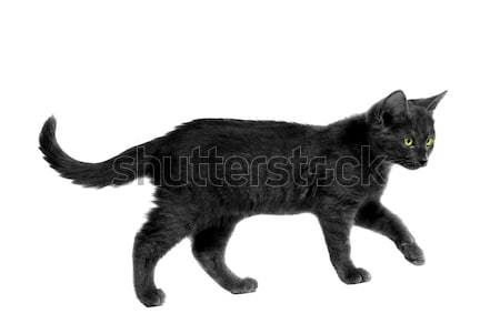 black Haloween Cat Stock photo © dnsphotography