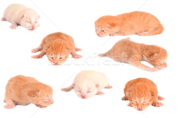 Сток-фото: котят · белый · группа · коллаж · имбирь