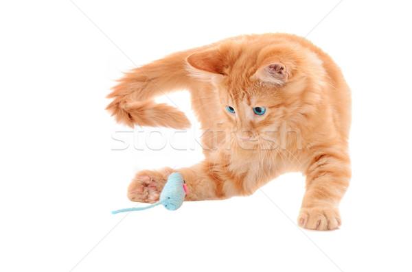 Pomarańczowy kotek gry zabawki myszą imbir Zdjęcia stock © dnsphotography