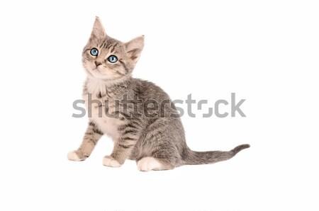 Foto stock: Sesión · gatito · blanco · bebé · feliz · ojos