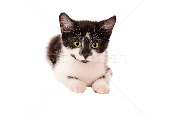 Foto stock: Adorable · triste · blanco · negro · gatito · blanco · negro