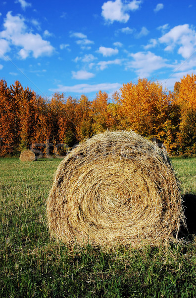 Hay Bale Stock photo © dnsphotography
