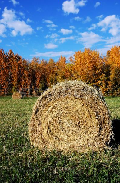 Széna bála labda mező ősz égbolt Stock fotó © dnsphotography