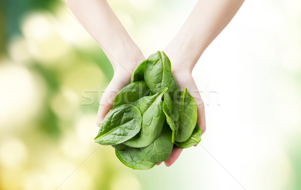close up of woman hands holding spinach Stock photo © dolgachov