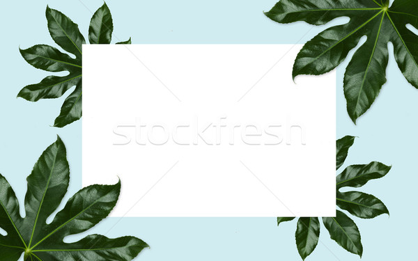 white blank space and green leaves over blue Stock photo © dolgachov