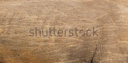Rinoceronte pele textura natureza animais selvagens fundo Foto stock © dolgachov
