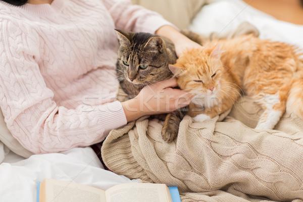 所有者 赤 猫 ベッド ペット ストックフォト © dolgachov