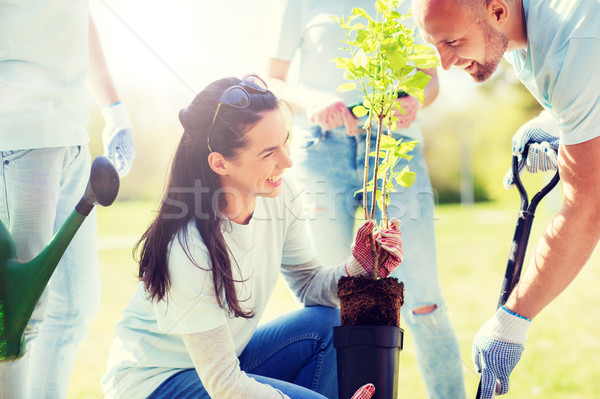 Grupy wolontariusze drzewo parku wolontariat Zdjęcia stock © dolgachov
