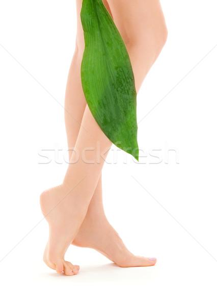 Vrouwelijke benen groen blad foto witte vrouw Stockfoto © dolgachov