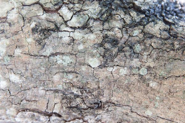 tree trunk bark texture Stock photo © dolgachov