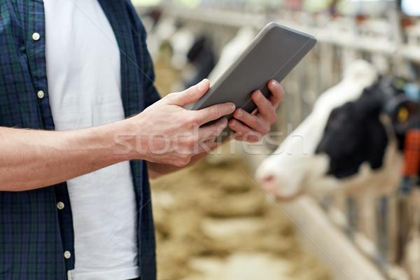 Człowiek krów mleczarnia gospodarstwa rolnictwa Zdjęcia stock © dolgachov