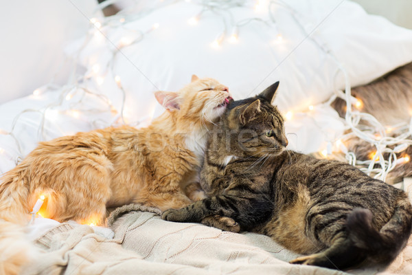 two cats lying in bed with garland at home Stock photo © dolgachov