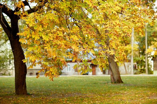 Outono castanha árvore cidade parque temporada Foto stock © dolgachov
