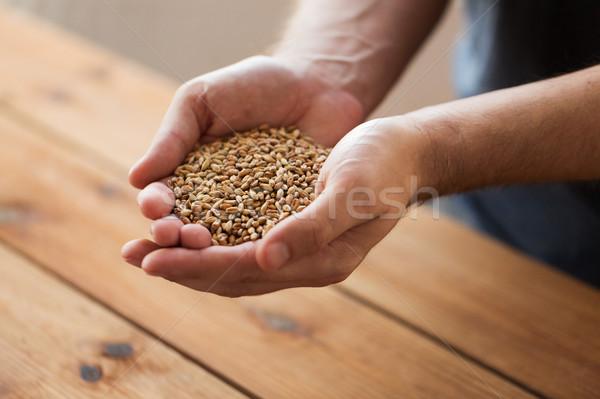 Erkek çiftçiler eller malt tahıl Stok fotoğraf © dolgachov