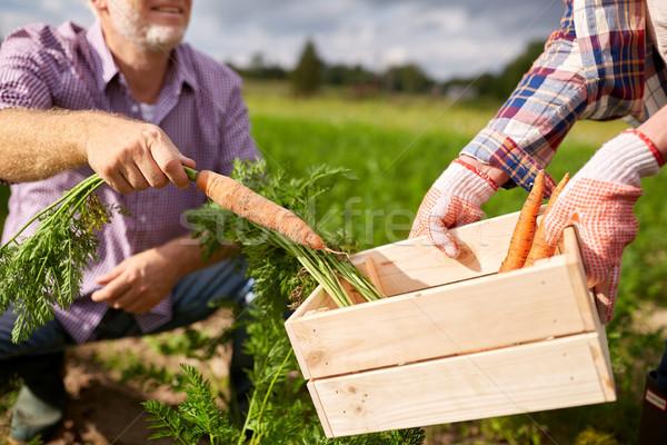 Stockfoto: Vak · wortelen · boerderij
