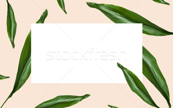 Zöld levelek fehér üres hely bézs természet organikus Stock fotó © dolgachov