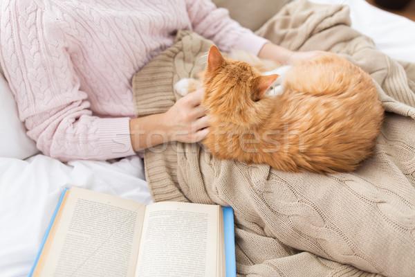 Eigenaar Rood kat bed home Stockfoto © dolgachov