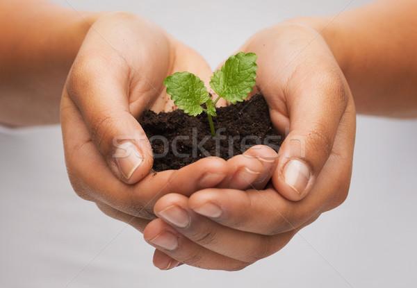 Mulher mãos planta solo fertilidade Foto stock © dolgachov