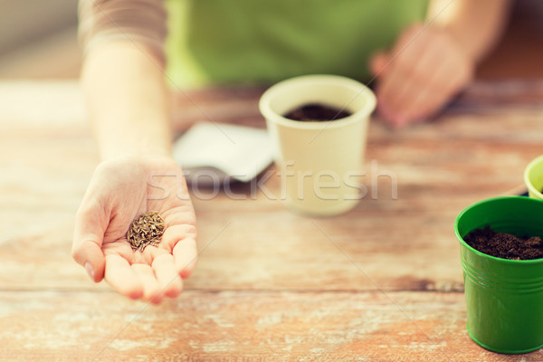 close up of woman hand holding seeds Stock photo © dolgachov