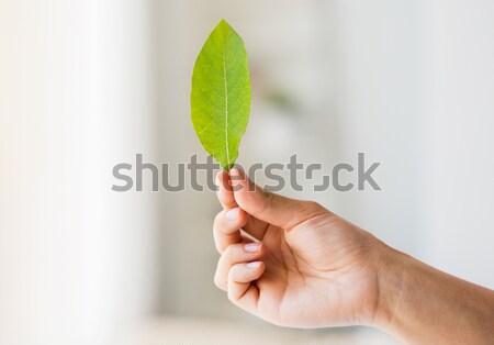 Mulher mão folha verde pessoas Foto stock © dolgachov