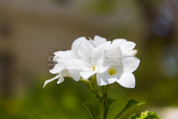 Exotisch bloem buitenshuis tuinieren natuur plantkunde Stockfoto © dolgachov