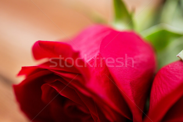 close up of red rose flowers Stock photo © dolgachov