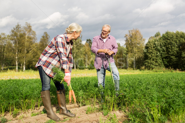 senior couple with shovel picking carrots on farm Stock photo © dolgachov