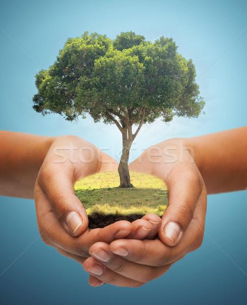 hands holding green oak tree over blue background Stock photo © dolgachov