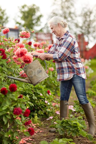 Idős nő locsol virágok nyár kert Stock fotó © dolgachov