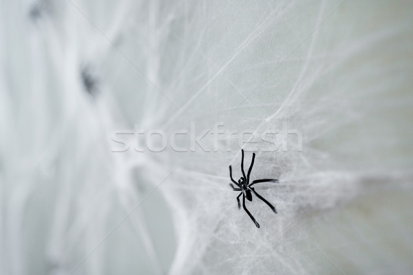 Stock photo: halloween decoration of black toy spider on cobweb