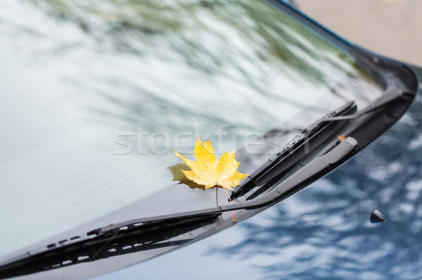 автомобилей осень Maple Leaf сезон транспорт Сток-фото © dolgachov