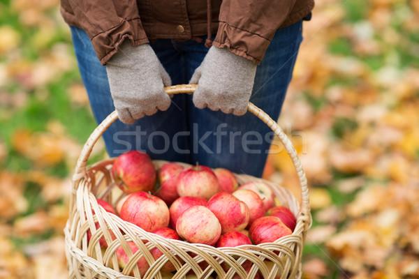 Сток-фото: женщину · яблоки · корзины · осень