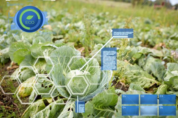 Kool groeiend zomer tuin bed boerderij Stockfoto © dolgachov