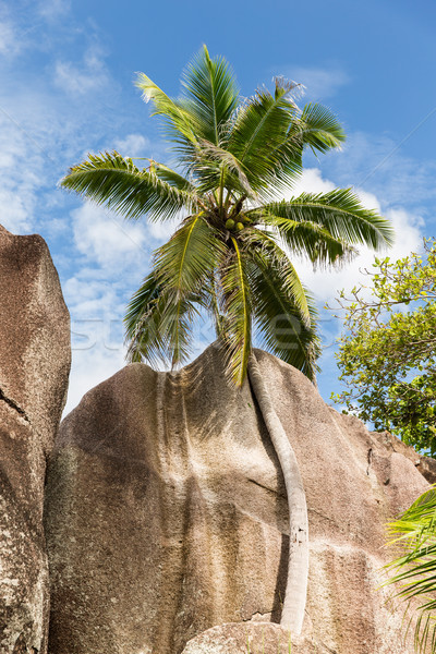 ツリー 島 ビーチ セイシェル 旅行 ストックフォト © dolgachov