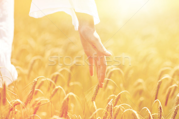 close up of woman hand in cereal field Stock photo © dolgachov