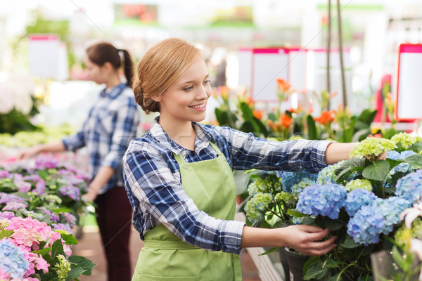 happy woman taking care of flowers in greenhouse Stock photo © dolgachov